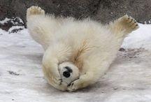 Medvídci/Bears / Animals-Medvídci/Bears