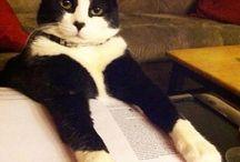Pet Concurseiro / Todo mundo entrando na rotina de estudos!
