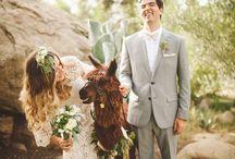 Hochzeit & Tiere
