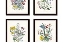 Botanical art to buy