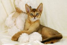 Cat Breeds / Breeds from around the world.