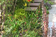 Foundations for Growth 2015 / Silver Gilt Medal  - Hampton Court Palace Flower Show 2015 Provender Nurseries show garden at Hampton Court Flower Show designed by Rachel Pocock and Vanessa Hoch , the winner of our Provender Garden Redesign competition with Capel Manor College 2015.