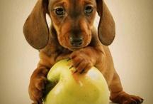 Doggies :3