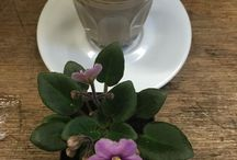 Coffee flower art