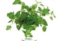 Reklamowe rośliny / Promotional plants