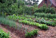 Seedbed garden