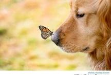 butterflies#dragonflies#ladybugs#humming birds