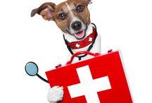 Bienestar de tu mascota /  EVI cuenta con un variado portafolio de productos y servicios desarrollados para el bienestar de tu mascota, ya que ella es nuestra razón de ser.