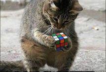 Gatti più intelligenti di Hélène