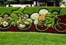 Landscape Designs / by Pam Walters