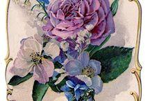 Flowers-Vintage / by Dorota Wrona