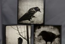 Crows / by Jackie Hall