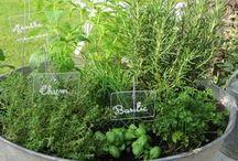 plantes aromatiques bassine zinc