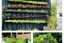 Vertical Small Garden