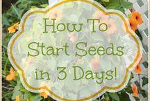 Flower seed starts 3 days