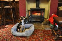 Pub dogs! / Dogs spotted in pubs on our travels!