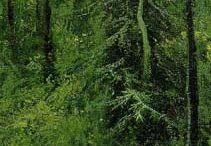 ymppi metsät