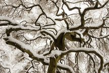 Árvores - IP -
