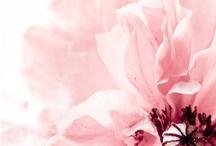 Fleurs / by Laurence Court-Desvignes