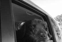 Barney my doggie