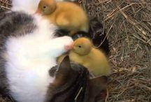 En Sevimliler burada / Sevimli hayvanların neşeli hayatları burada