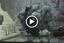 Oscar fish break dance / Oscar fish break dance https://plus.google.com/u/0/117740905091175567743/posts