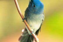 Tweet Tweet / anything bird related / by Karen Dayton