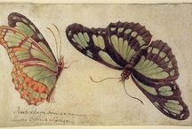 Des papillons très colorés !
