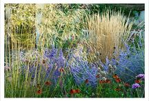 Plants and Planting / Fav plants and planting combinations