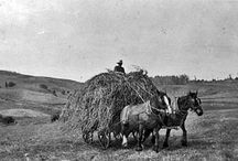 Horse Drawn Farming