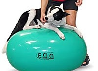 Rehab and work out info for agility dogs!