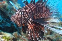 Underwater Grand Cayman