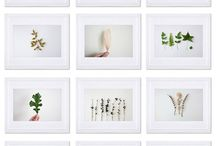Photo Series Inspiration