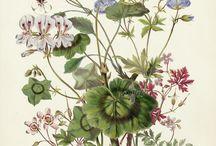 Bloemen- en plantenpracht en kracht