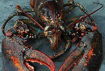 Crustacea&Octopus