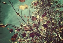 iPhoneography / iPics by other people. Images I like.