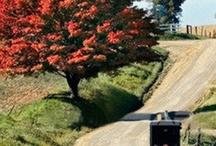 Amish / Amish way of living, quilts, horses and buggies...