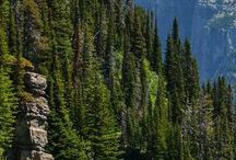Home is Where the Mountains Are! / Life in Bozeman, Montana
