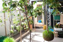 string gardens