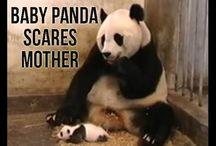 Pandamama y bebe