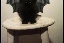 sweet cats / Hier gibt süße Katzen zu sehen.