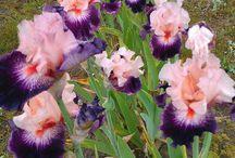 Fleurs/Plantes