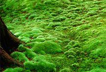 COLOUR: Greens