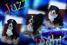 My dogs - my love :)