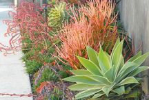 Xeriscaping / Landscaping ideas for dealing with drought and water restrictions caused by climate change.