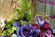 calladiums and container gardening