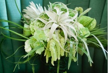 Wedding Flowers / by Maureen O'Laughlin Pellegrino