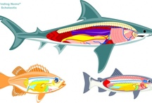 Homeschool Science - Zoology