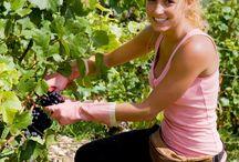 Le printemps des vignes / Contemplez les vignes après la période printanière ! Place à l'été, dernière ligne droite avant les vendanges !