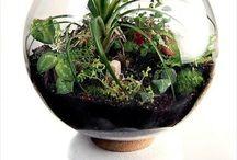 Κήπος φυτά κα